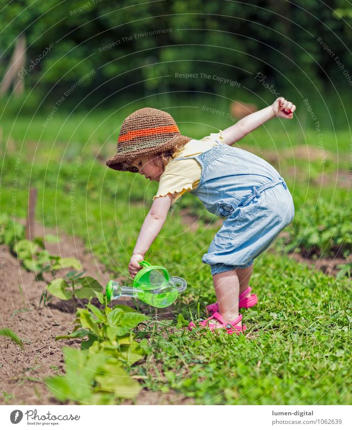 Child pours vegetable patch Summer Toddler Infancy Life 1 Human being 1 - 3 years Beautiful weather Plant Foliage plant Agricultural crop Sustainability Nature