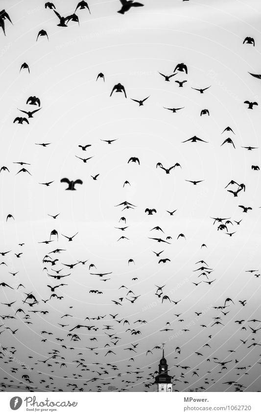 The birds Animal Flock Flying Bird Religion and faith Church spire Creepy Horror film Heaven Escape Black & white photo Exterior shot Deserted Day