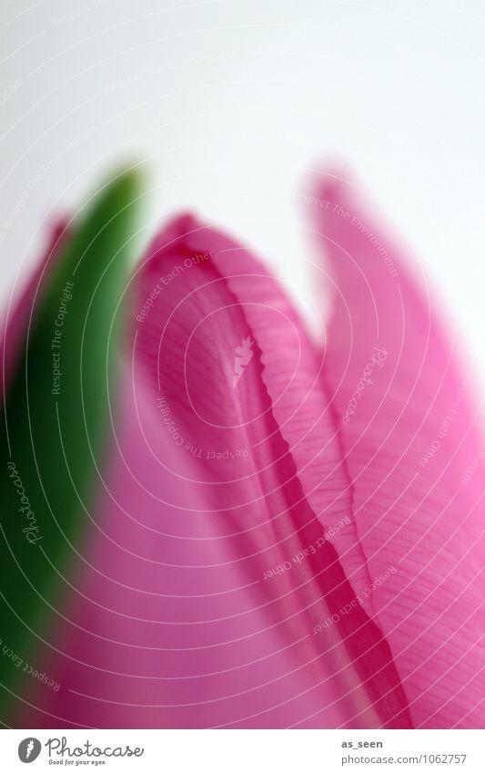Nature Green Beautiful Colour Flower Eroticism Leaf Life Blossom Spring Natural Pink Design Growth Illuminate Elegant
