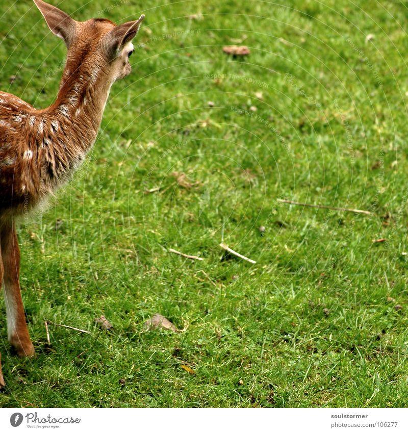 White Green Meadow Grass Small Legs Feet Brown Field Wild animal Back Mouth Fresh Ear Lawn Blade of grass