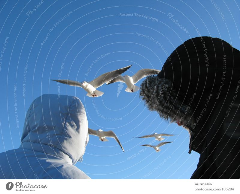the Observers 2 5 Winter Binz Hooded (clothing) Pelt Seagull Bird Feeding Beautiful weather Cold Duet Blue Beach above Looking Aviation Clarity Nature