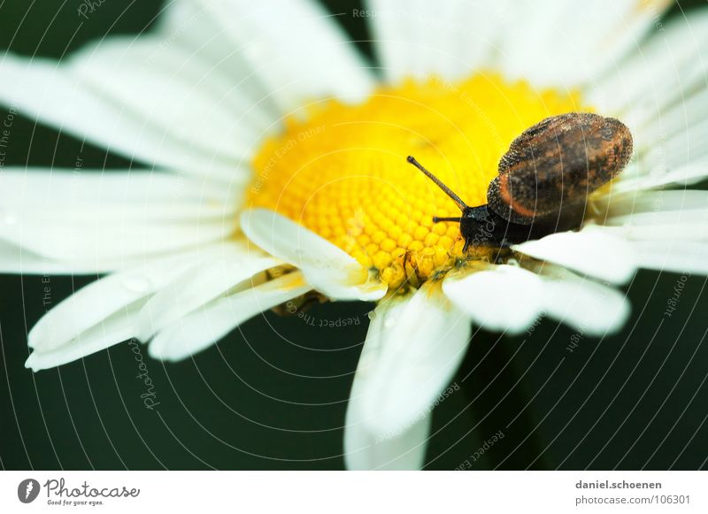 Nature White Flower Summer House (Residential Structure) Yellow Meadow Blossom Movement Snail Flower meadow Crawl Slowly Blossom leave Snail shell