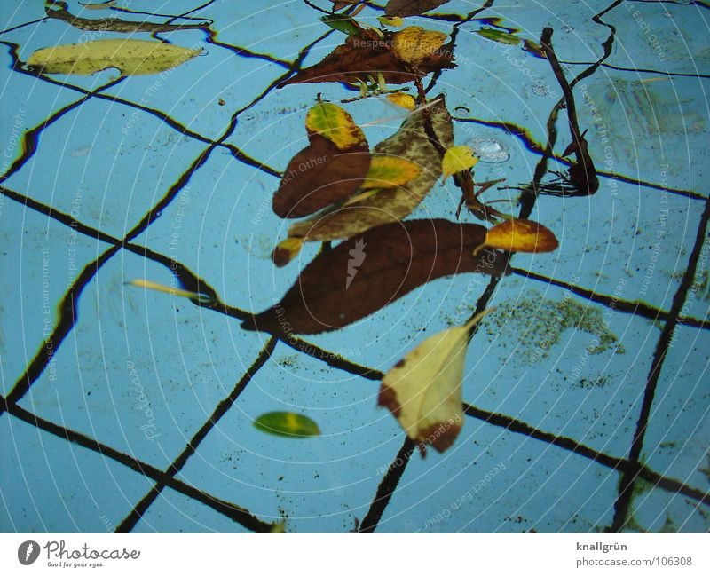 Summer is over Leaf Brown Autumn Early fall Transience Water Blue Basin Tile fallen leaves