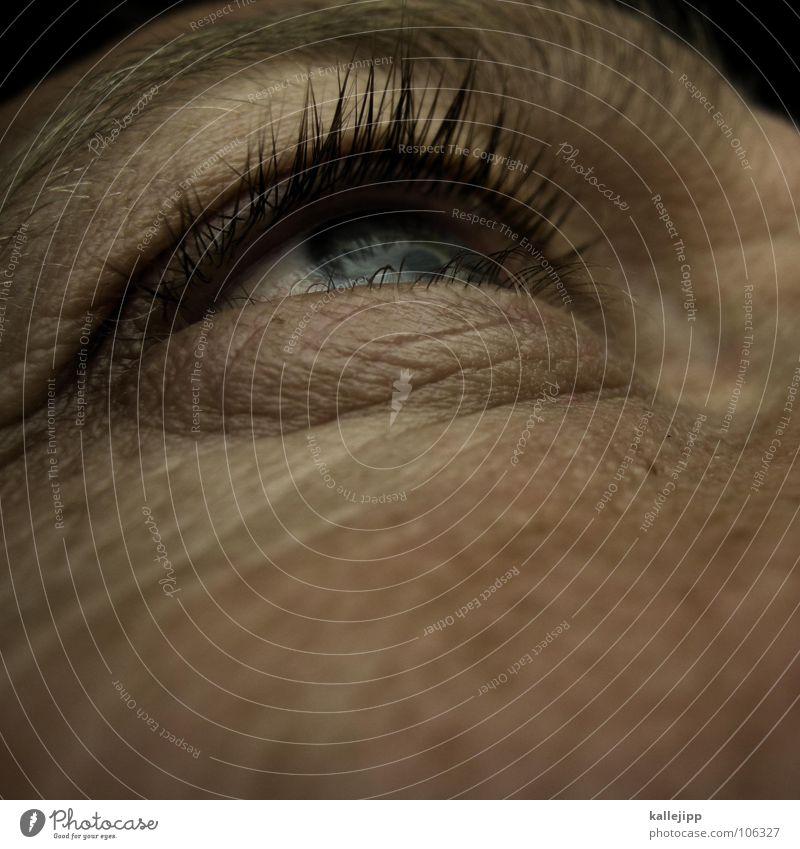 Human being Man Blue Eyes Life Skin Living thing Wrinkles Freckles Eyelash Eyebrow Iris Pore