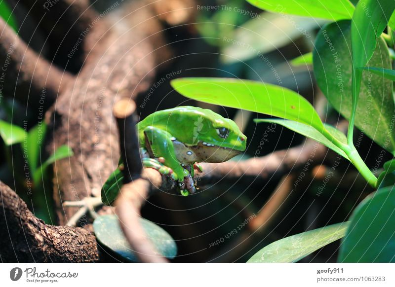 Green Frog Nature Plant Animal Wild animal Zoo 1 Hang Colour photo Exterior shot Close-up Morning Shallow depth of field Central perspective Animal portrait