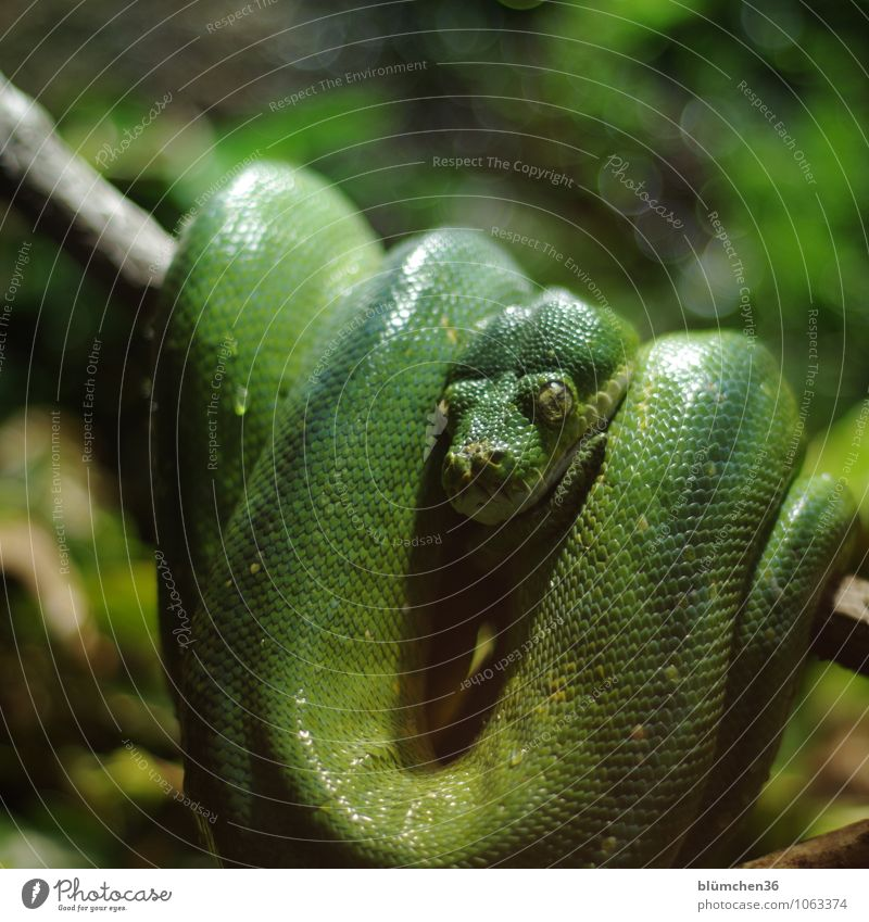 Green Animal Natural Exceptional Fear Wild animal Wait Dangerous Observe Threat Hide Animal face Exotic Hang Panic Muscular