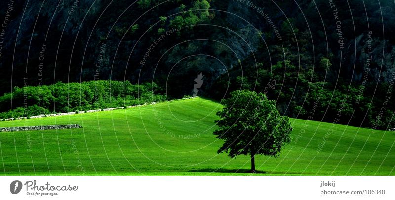 Greenland Tree Geometry Lighting Leaf Triangle Bushes Forest Wood flour Slope Hill Meadow Shadow Nature Biology Plant Grass surface Partition Garden Park