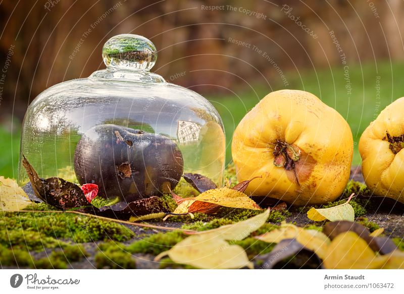 Still Life - Autumn - Fruit Food Apple Nutrition Lifestyle Healthy Healthy Eating Fragrance Garden Nature Beautiful weather Moss Leaf Meadow Lie Esthetic Fresh