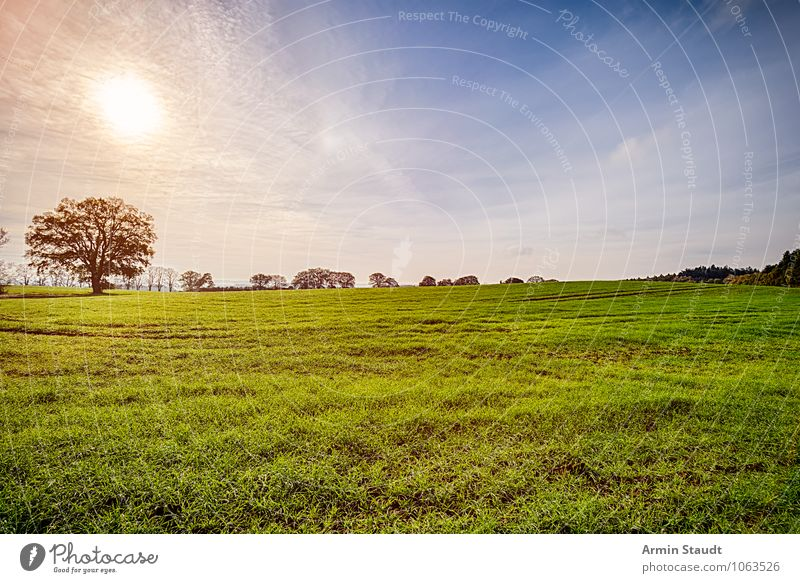 Landscape - Tree - Sun Nature Sky Sunrise Sunset Sunlight Spring Summer Autumn Beautiful weather Park Meadow Field Illuminate Growth Far-off places Fresh Bright