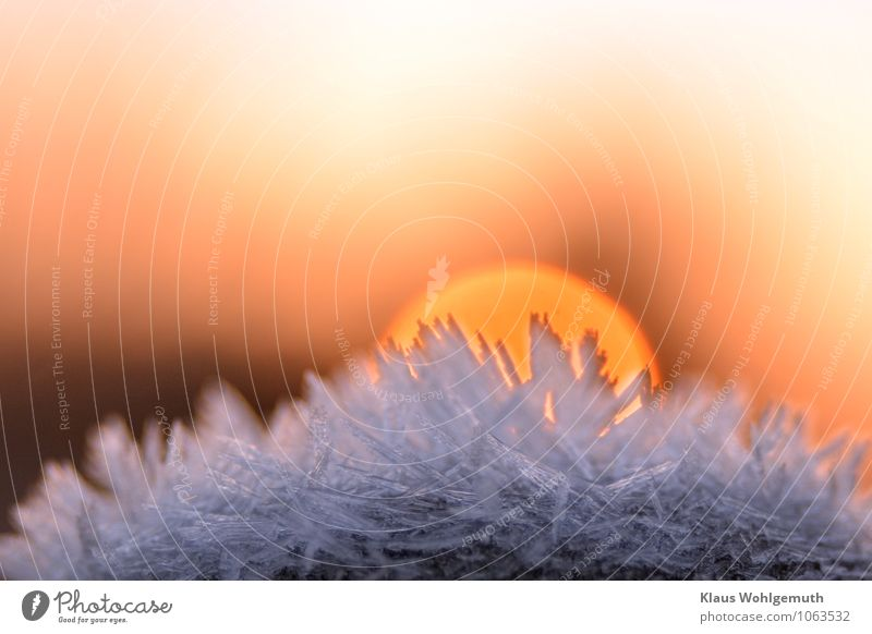 Nature Blue White Sun Winter Environment Snow Brown Pink Gold Freeze Crystal