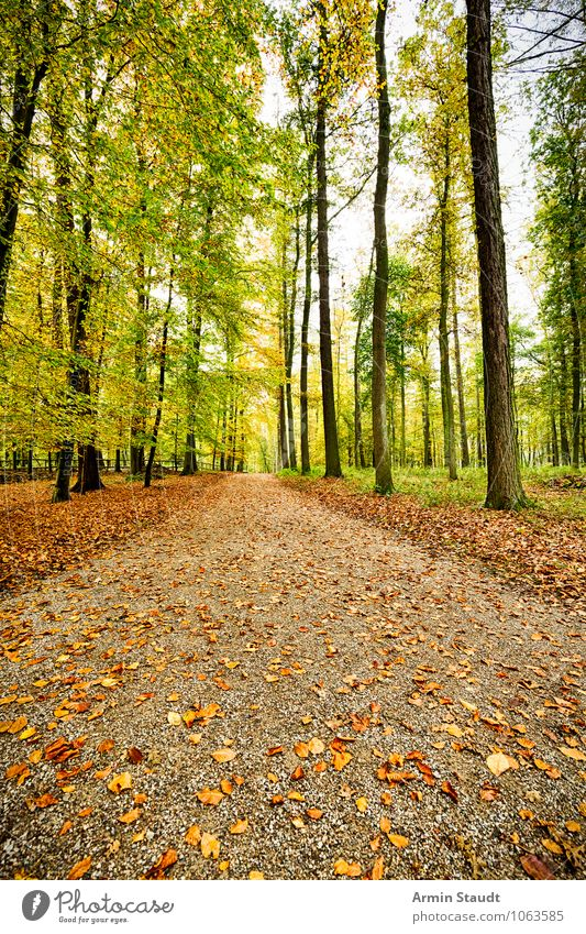 Nature Vacation & Travel Green Tree Relaxation Landscape Far-off places Forest Environment Autumn Natural Lanes & trails Brown Moody Dream Earth