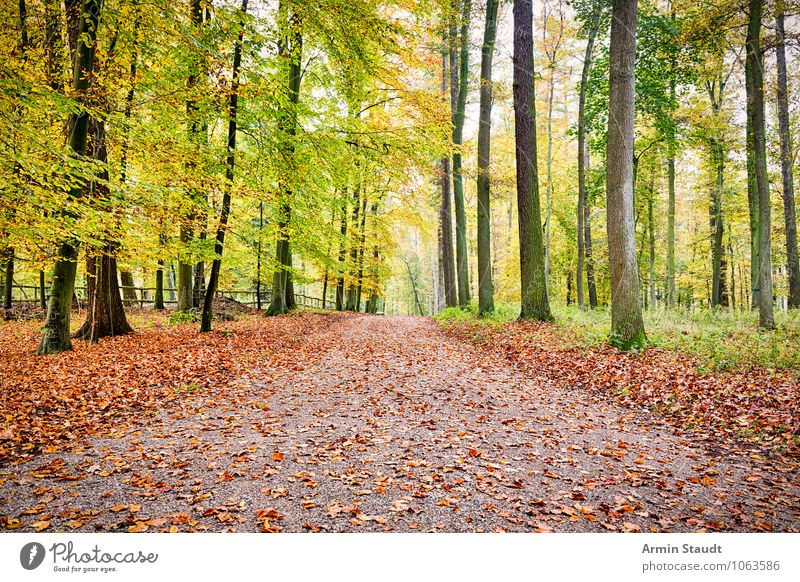 autumn forest trail Harmonious Relaxation Vacation & Travel Far-off places Hiking Environment Nature Landscape Earth Autumn Beautiful weather Tree Forest