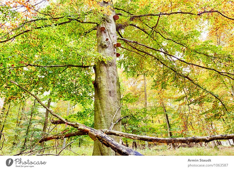 autumn tree Harmonious Contentment Nature Landscape Autumn Beautiful weather Tree Forest Old Growth Esthetic Dark Large Natural Positive Yellow Green Moody