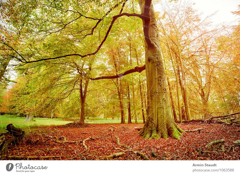autumn forest Harmonious Contentment Nature Landscape Autumn Beautiful weather Tree Forest Old Growth Esthetic Dark Large Natural Yellow Green Moody Power