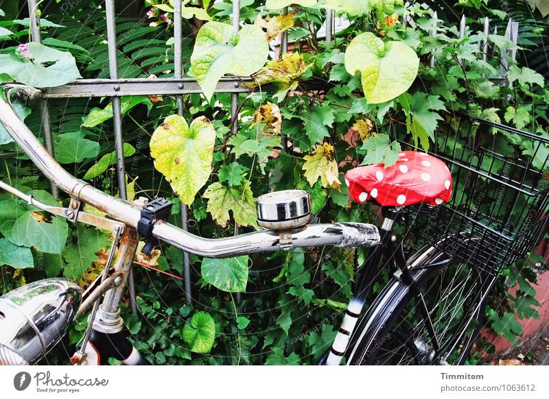 More color. Leisure and hobbies Cycling Plant Foliage plant House (Residential Structure) Fence Bicycle Bicycle saddle Metal Wait Simple Green Red Emotions