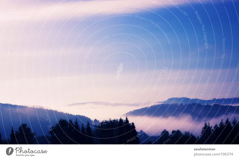 Beautiful Sky Tree Clouds Forest Mountain Dream Landscape Fog Beginning Idyll Hill Treetop Fairy tale Valley Sunrise