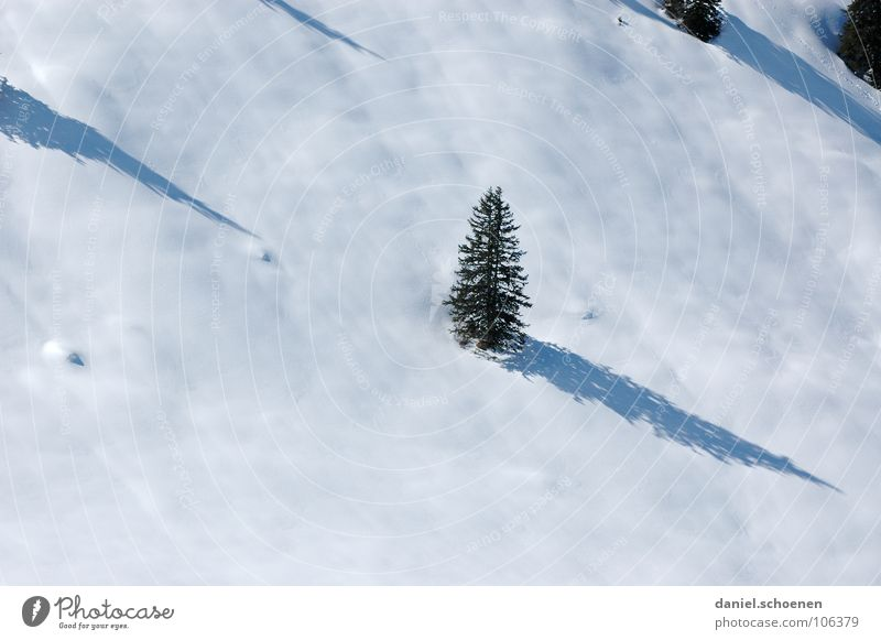 o fir tree ... White Tree Vacation & Travel Winter vacation Black Forest Deep snow Powder snow Fir tree Hiking Gray Mysterious Unclear Skier Illuminating