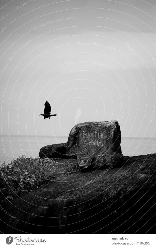 Sky Ocean Animal Dark Stone Sadness Bird Coast Going Flying Horizon Rock Grief Wing Distress Dreary