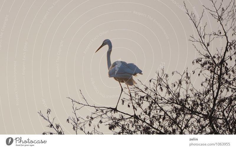 White Animal Bird Wait Living thing Thin Serene Watchfulness Hunting Patient Great egret