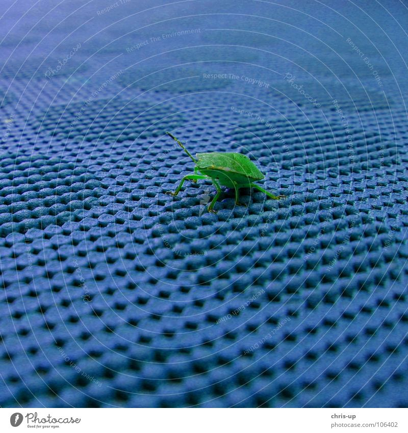 Nature Blue Green Animal Colour Small Legs Table Wing Insect Beetle Disgust Crawl Feeler Camouflage