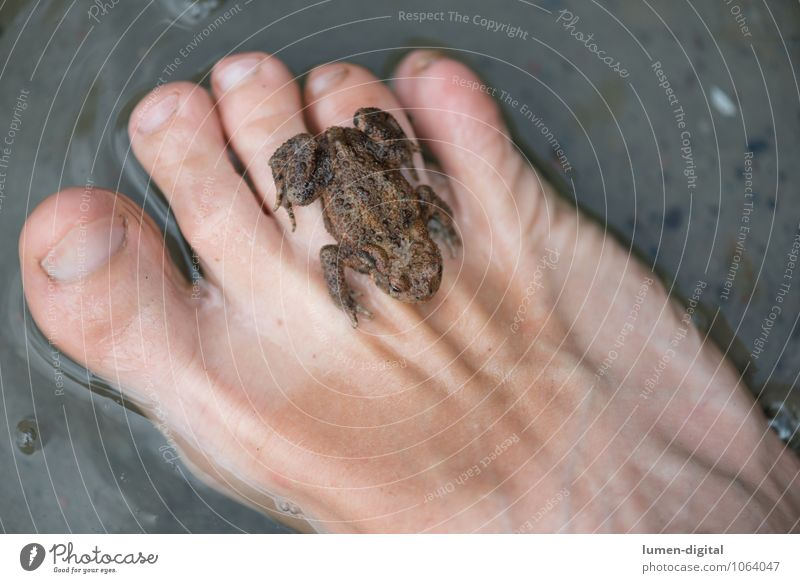 Frog on foot Human being Feet Nature Lake 1 Animal Sit Brown Safety (feeling of) amphibians Hop Painted frog Tree frog Colour photo Detail