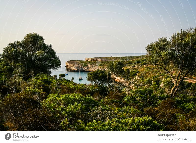 Mallorca from its most beautiful side 43 - View of the bay Vacation & Travel Tourism Far-off places Freedom Summer vacation Environment Nature Landscape Plant
