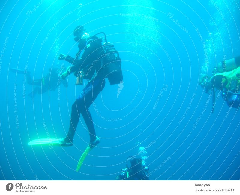 Weightless Dive Ocean Diver Vacation & Travel Beach Cabo Verde Africa Weightlessness Air Oxygen Aquatics Group Human being Water Blue Blow Bubble