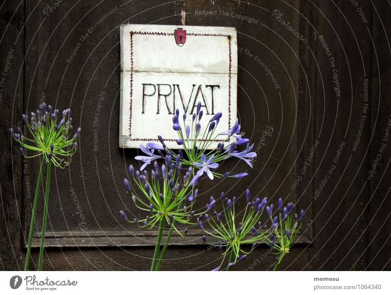 Blue Plant Relaxation Flower Calm Blossom Brown Flat (apartment) Room Contentment Decoration Door Signs and labeling Characters Signage