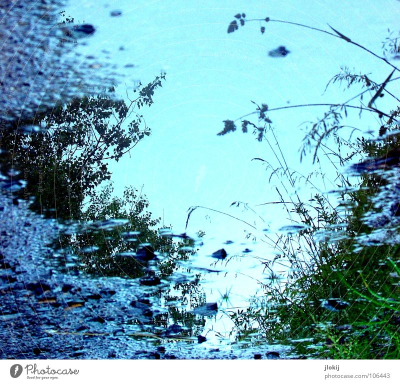 Blue hour Grass Blossom Tree Bushes Light Asphalt Roadside Green Puddle Rainwater Nature Worm's-eye view Navigation Water Plant Reflection Dirty Earth blue