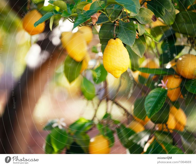 Yellow. Art Esthetic Contentment Fragrance Lemon Lemon juice Lemon yellow Lemon peel Majorca Spain Mature Delicious Sour Healthy Eating Ecological