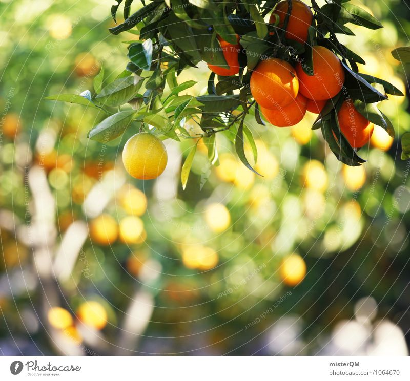 Yellow-orange. Art Environment Nature Landscape Esthetic Contentment Orange Orange juice Orange peel Orangery Orange tree Colour photo Subdued colour