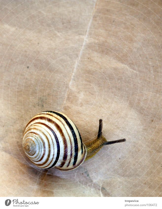 snail House (Residential Structure) Paper Animal Spiral Snail shell Striped Slowly Brown Background picture Feeler Flat (apartment) In transit Bird's-eye view