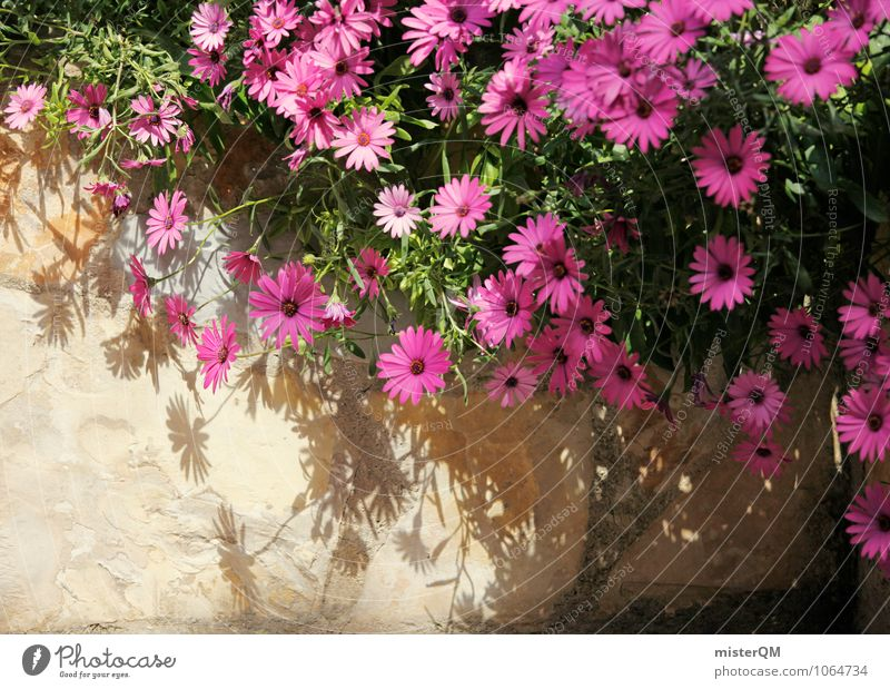 Pink wall. Art Esthetic Flower Wall (barrier) Wall plant Building stone Rest of a wall Blossom Colour photo Subdued colour Exterior shot Close-up Abstract