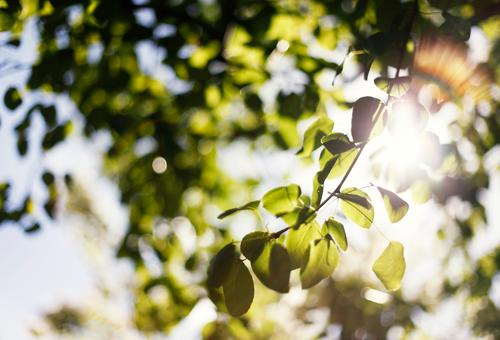 Nature Plant Green Summer Tree Leaf Landscape Environment Contentment Climate Esthetic Beautiful weather Treetop Summery Glare effect Summer's day