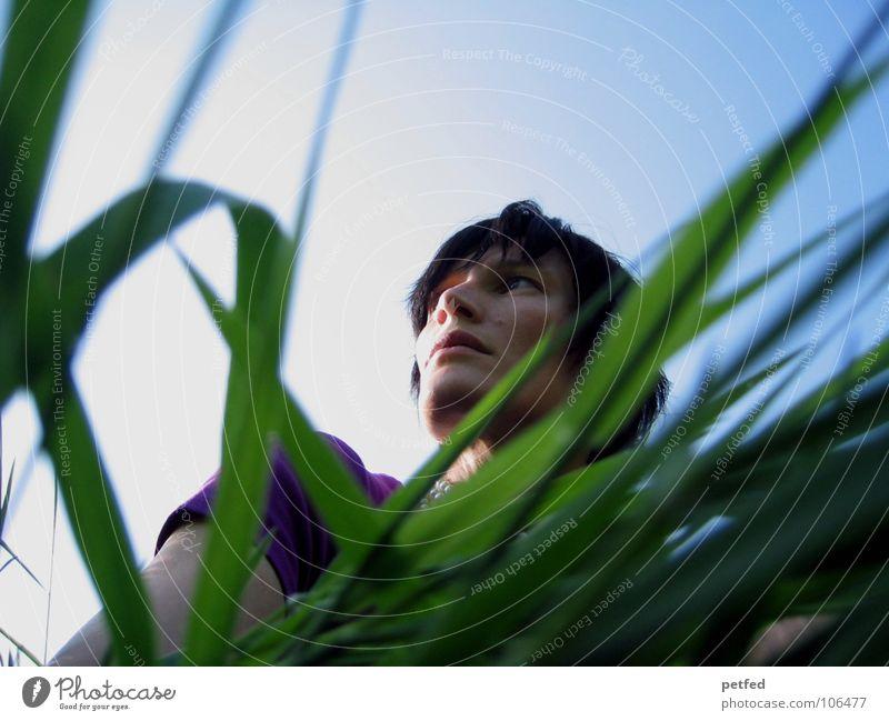 longing Wanderlust Longing Violet Grass Green Emotions Woman Human being Looking Wait Nature Sky Blue Shadow below Life Head