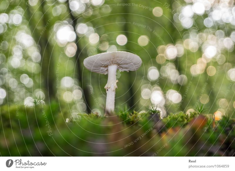 In the Moss III Nature Plant Elements Earth Autumn Beautiful weather Agricultural crop Wild plant Mushroom Mushroom cap Collection White Overgrown Woodground