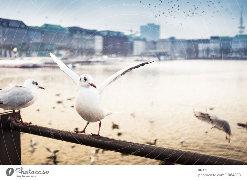 Alster happiness Lifestyle Joy Culture Air Water Beautiful weather Lakeside River bank Town Port City Downtown Skyline Animal Bird Wing 1 Flock Moody Happiness