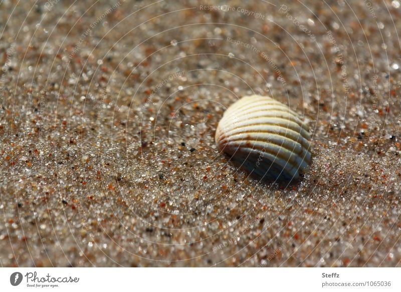 Nature Vacation & Travel Summer Loneliness Calm Beach Natural Well-being Harmonious Summer vacation Sandy beach Mussel Summery Maritime Peaceful Beige