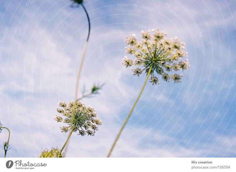 Nature Sky White Flower Blue Joy Clouds