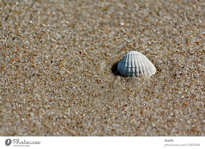 stranded on a Baltic beach Mussel Mussel shell Beach Sandy beach Grains of sand Summer warmth Warmth beach sand Maritime Summer feeling Well-being