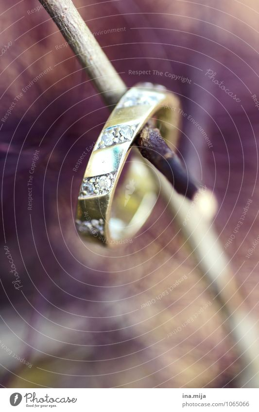 O Accessory Jewellery Ring Wood Gold Sign Glittering Sympathy Together Love Infatuation Loyalty Peace Love affair Lovesickness Display of affection
