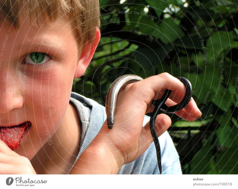 serpentine boy Slow worm Saurians Abstract Child Provocative Obsessed Animalistic Dangerous Boy (child) Snake Eyes Animal and human fanatical