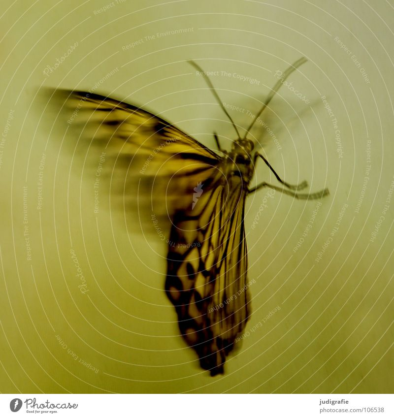Nature Beautiful Animal Colour Movement Legs Flying Wing Insect Butterfly Dynamics Feeler Judder
