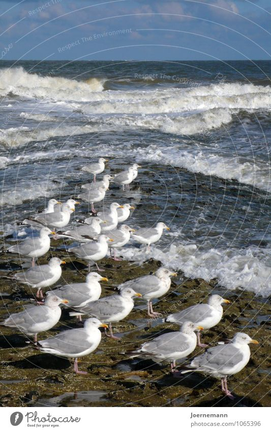 seagull parade Wellness Life Harmonious Well-being Contentment Relaxation Calm Swimming & Bathing Summer vacation Beach Ocean Waves Environment Nature Landscape