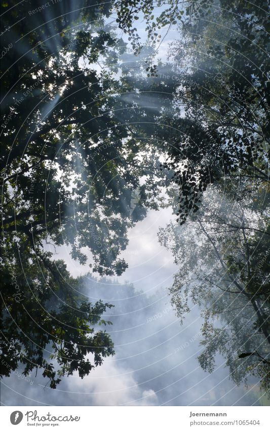 Sky Nature Blue Summer Sun Tree Clouds Forest Warmth Life Happy Glittering Dream Air Contentment Growth