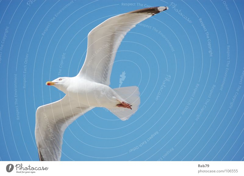 seagull Seagull Vacation & Travel Beach Bird Animal Sky Coast Freedom Far-off places Peace