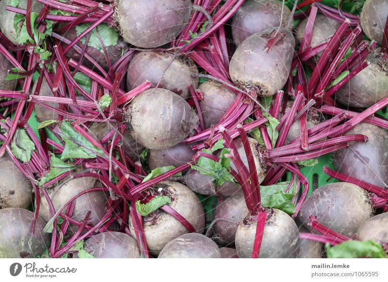 beetroot Red beet Root Root vegetable Healthy Large Above Original Green Colour photo Multicoloured Exterior shot Day Shallow depth of field