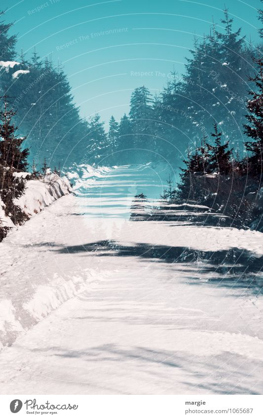 Imaginary winter trail Healthy Vacation & Travel Winter vacation Environment Nature Landscape Water Sky Sunlight Climate Beautiful weather Ice Frost Snow