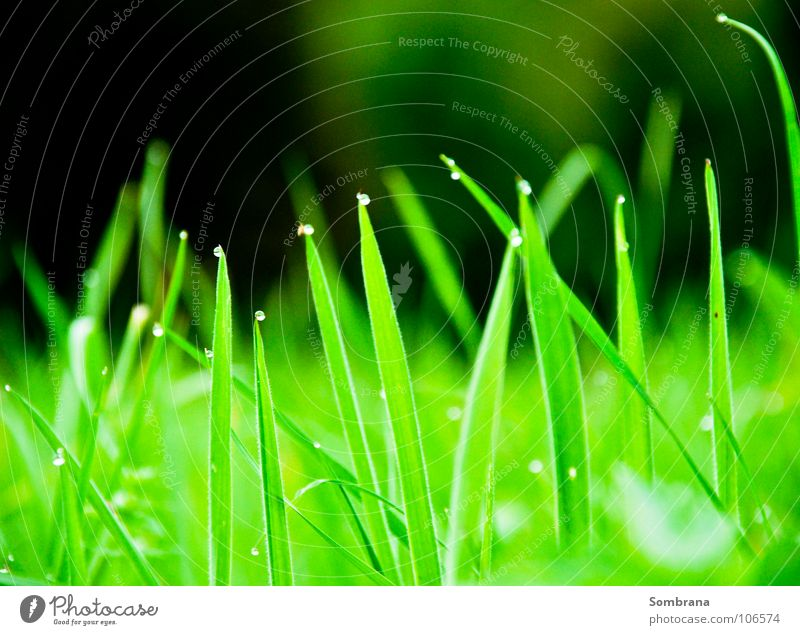 Nature Green Meadow Grass Spring Illuminate Drops of water Corner Point Blade of grass Dew Titillation
