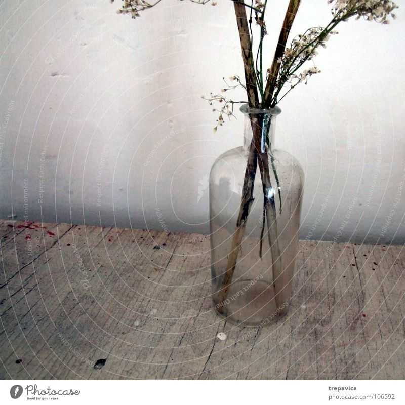 vase Flower Vase Decoration Wood Wall (building) Dirty Autumn Plant Brown Transparent Dry Dried Dried flower Glass Bottle bluette glass vase Old Twig